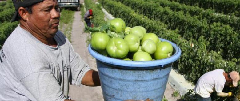 Tomato Workers in Florida Remake an Industry