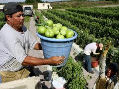 America's Tomorrow: Tomato Workers in Florida Remake an Industry